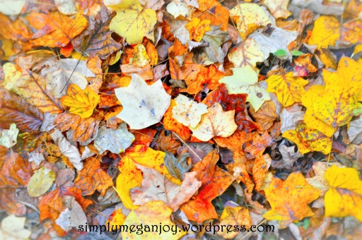 Things to Love About Autumn - simplymeganjoy.wordpress.com 19.JPG